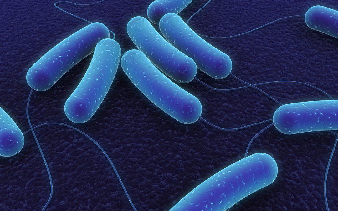 enomen-van-bacterien-kaart-brengen-om-infectieziektes-te-bestrijden