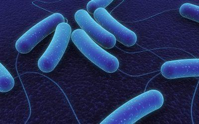 http://lic.leidenuniv.nl/news/genomen-van-bacterien-kaart-brengen-om-infectieziektes-te-bestrijden